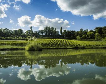 Castillon-Côtes de Bordeaux