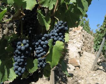 Domaine Vignobles Levet